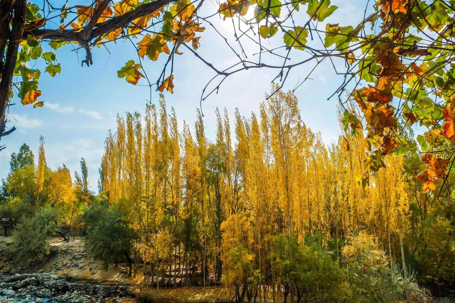 Vista del paisaje del bosque shigar y follaje en otoño, Pakistán foto
