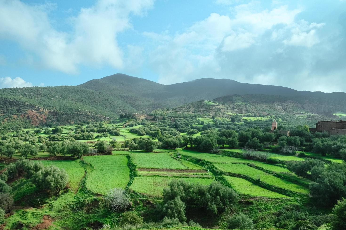 Green agriculture field in spring summer photo