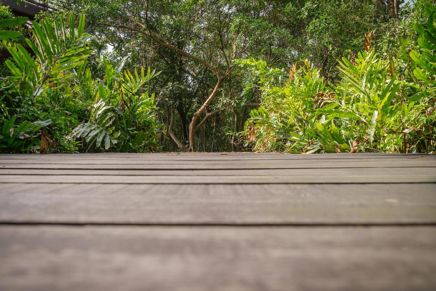 Vista de ángulo bajo del piso de madera oscura con exuberante bosque verde foto