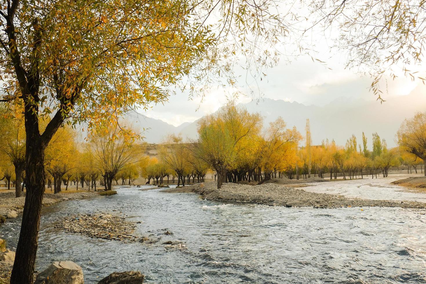 rivier die door kleurrijk gebladertebosje stroomt in de herfst foto
