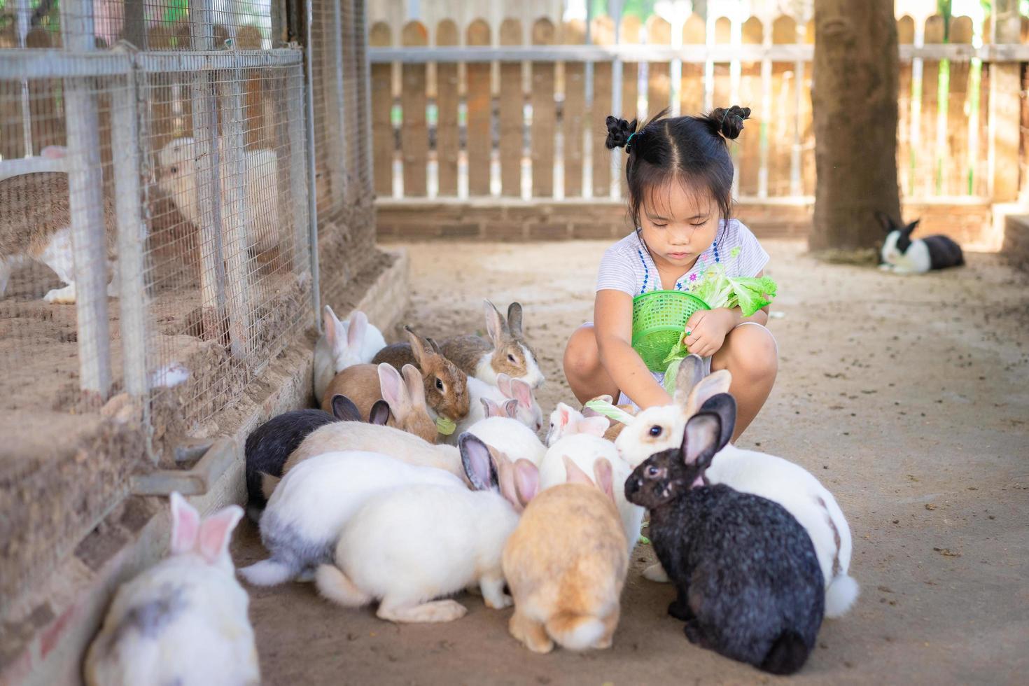 jovem menina asiática, coelhos de alimentação foto
