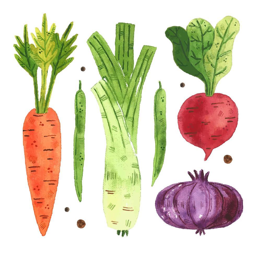 acuarela zanahoria, guisante, rábano, cebolla, puerro conjunto vector
