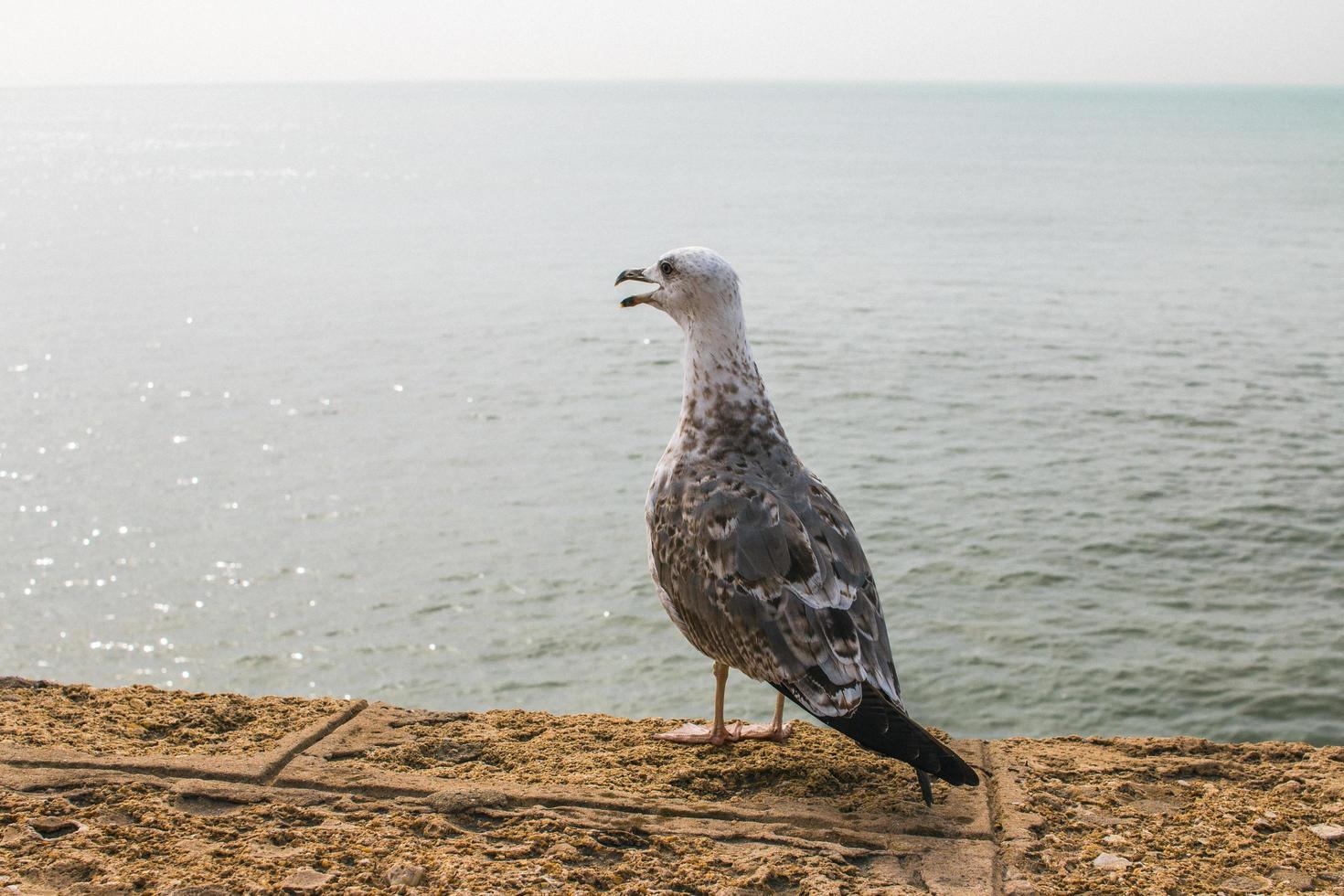 gaviota de pie en la pared cerca del océano foto