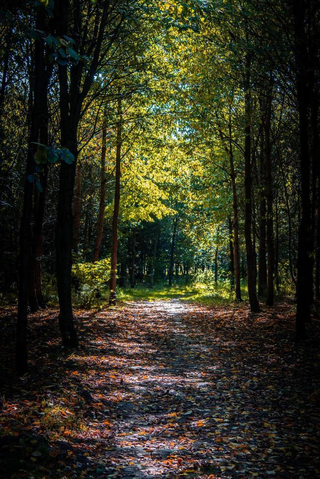 camino a pie a través de los árboles en el bosque foto