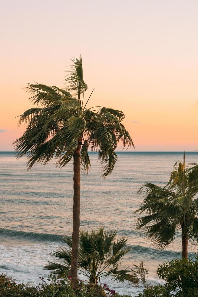 palmeras cerca del cuerpo de agua foto