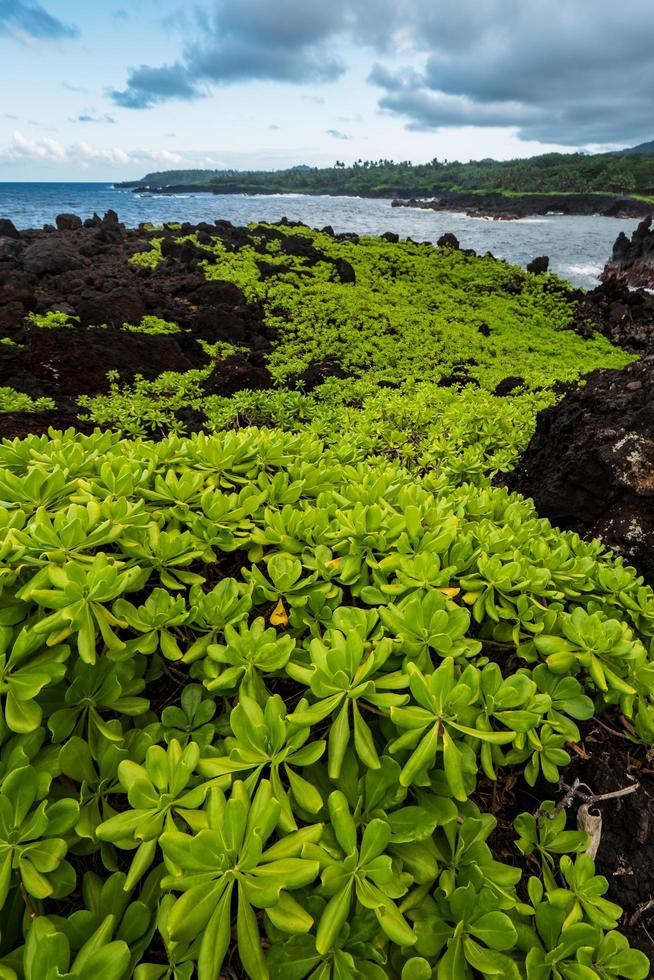 Green plant on rocks near a body of water. photo