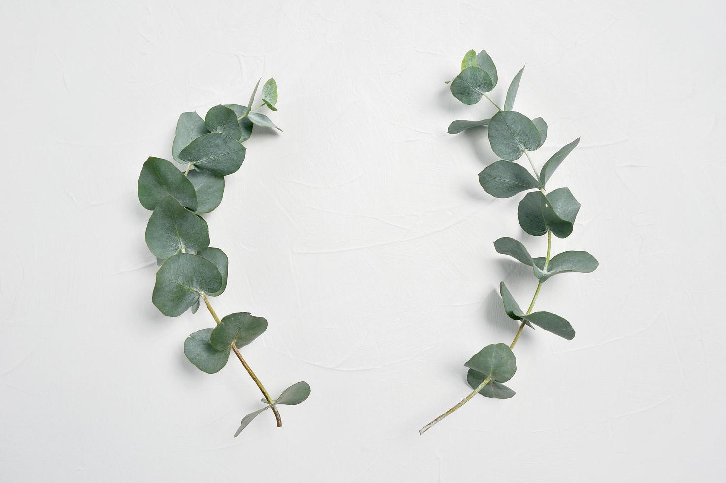 Eucalyptus leaves on stems photo
