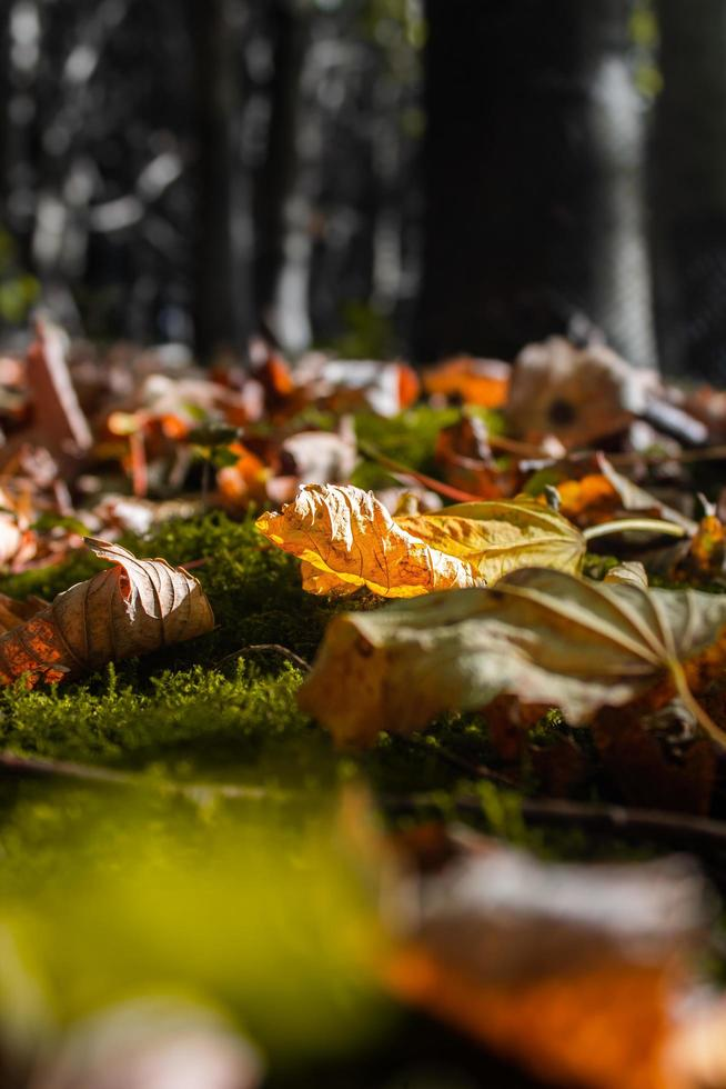 Colorful fallen leaves on forest floor photo