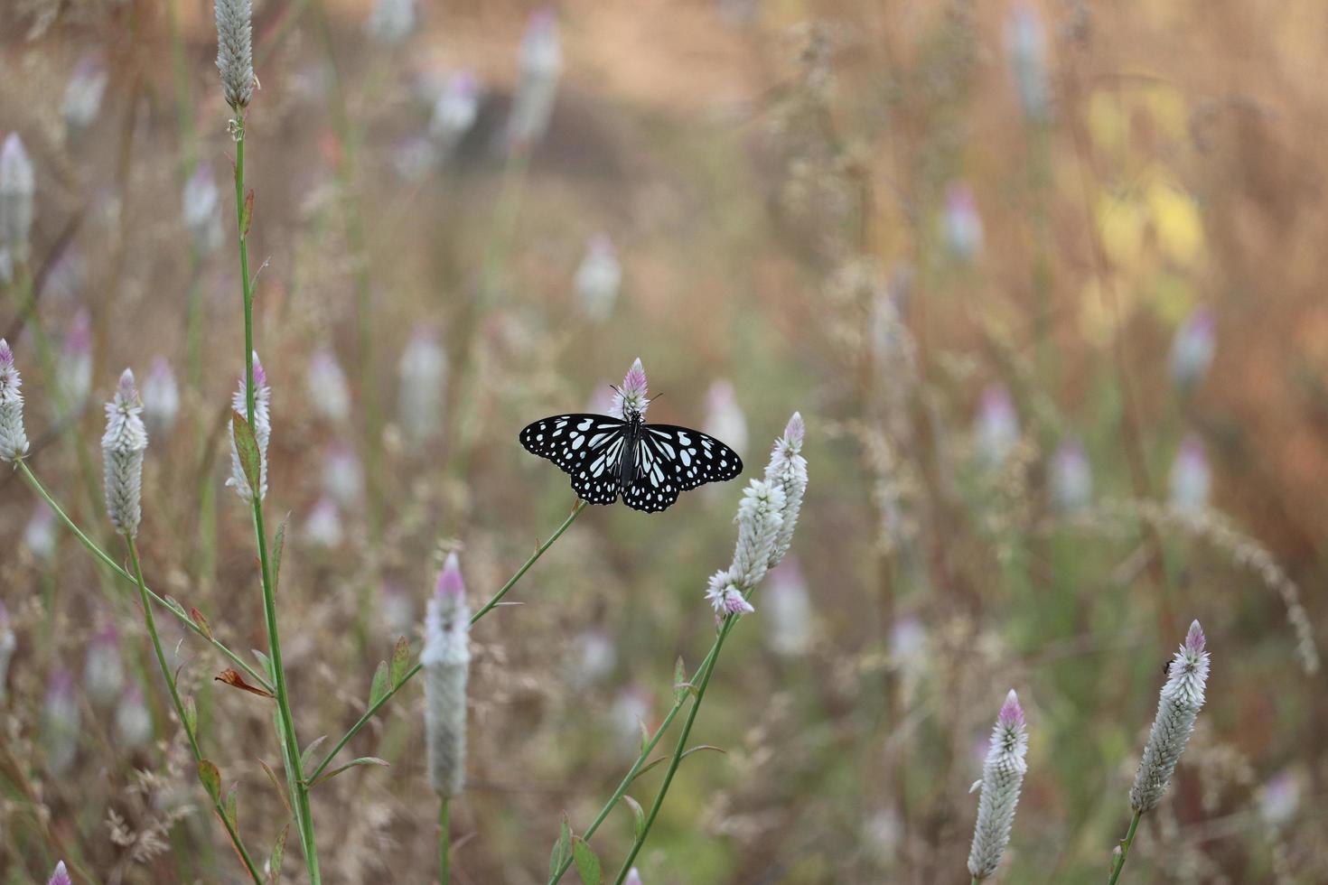 Butterfly on plant in field photo