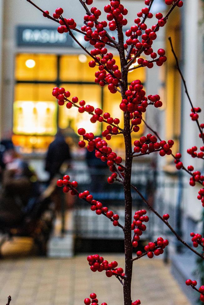 Red berry bush photo