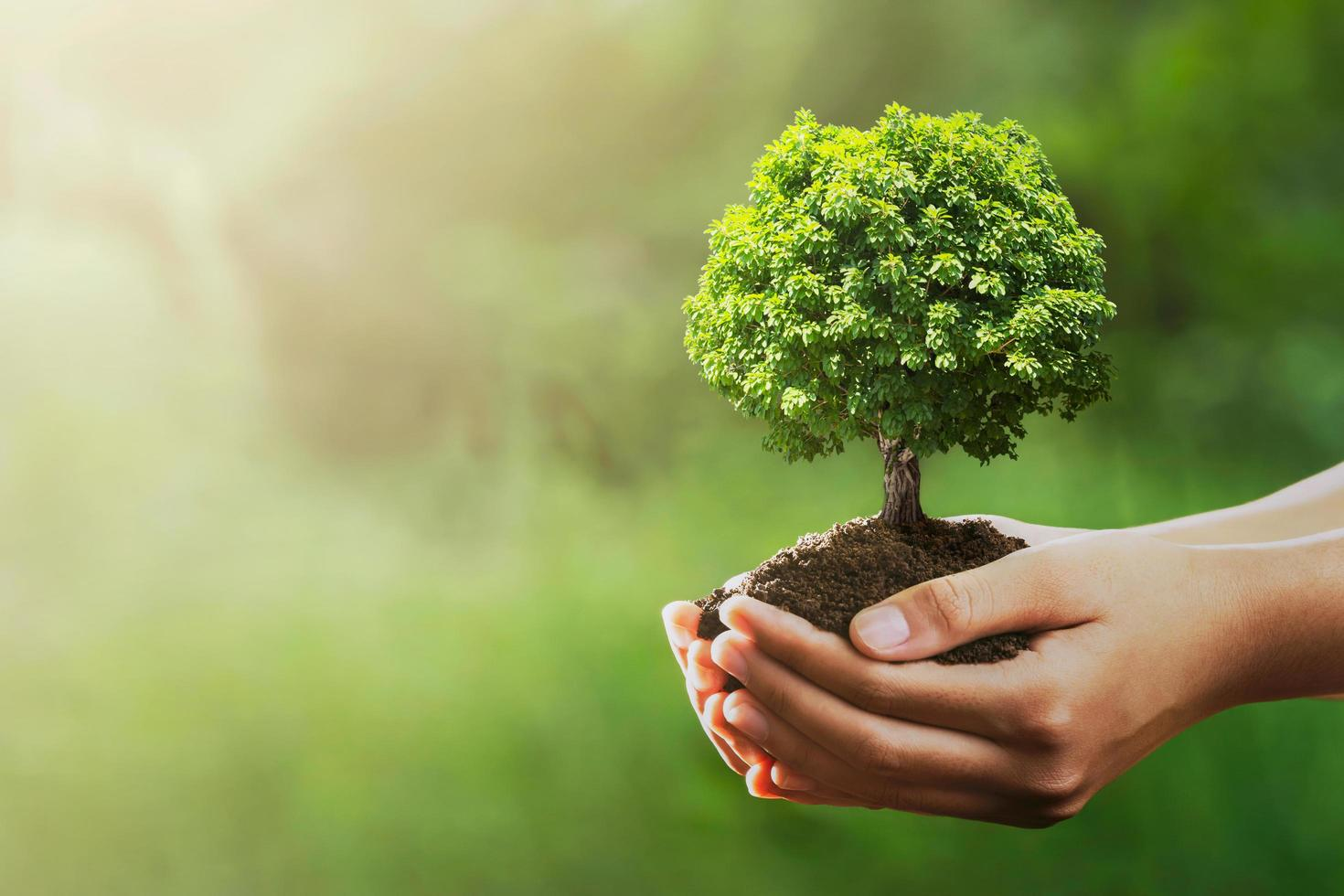 Hands holding tree and dirt photo