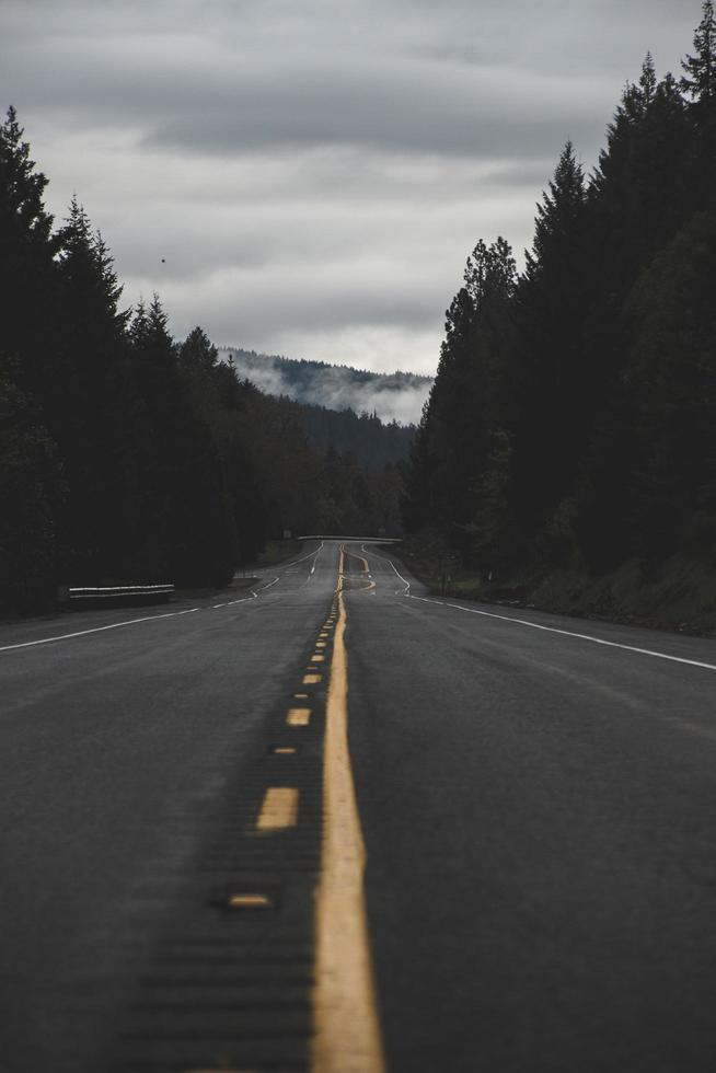 Road between trees photo