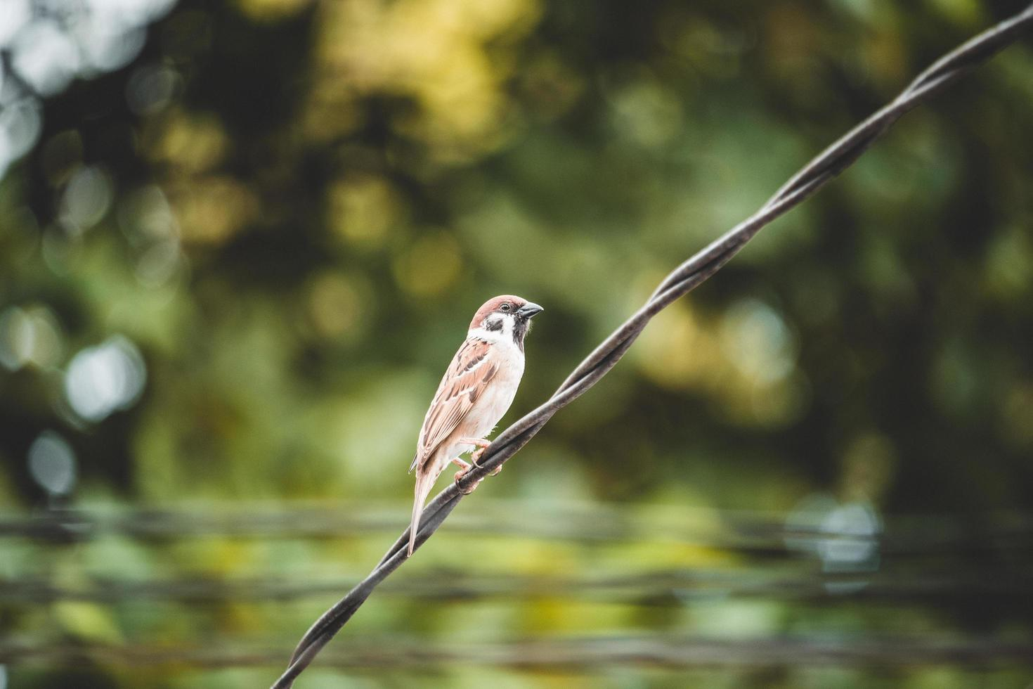 Bird perched on wire photo