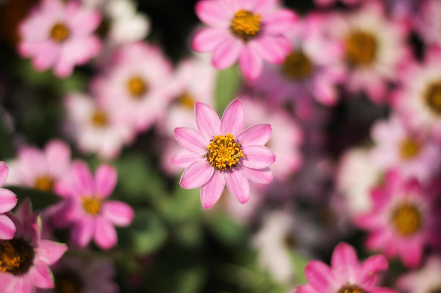 Pink flower in garden photo