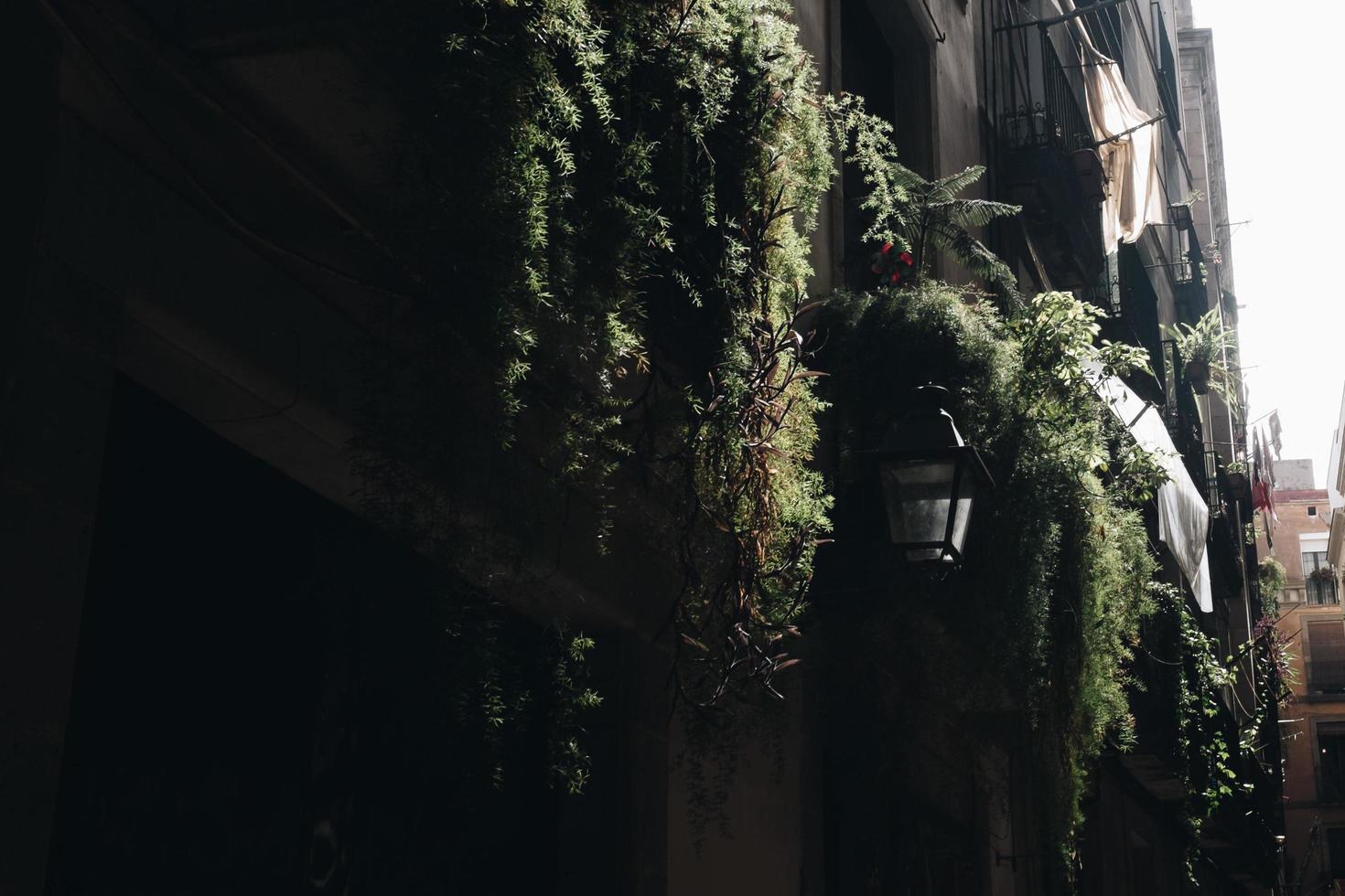 Potted vine plants photo