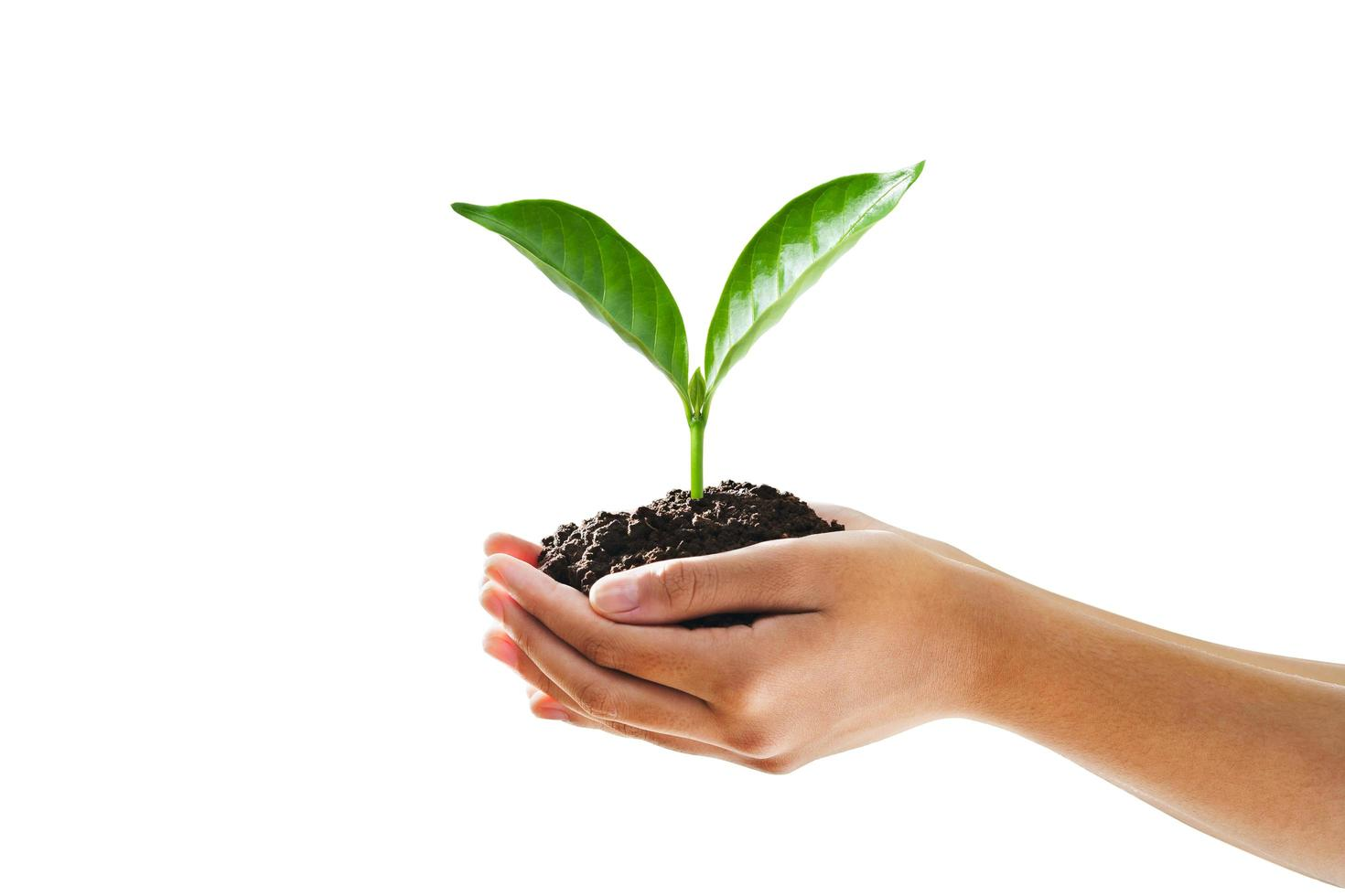 Hands holding seedling and dirt on white background photo