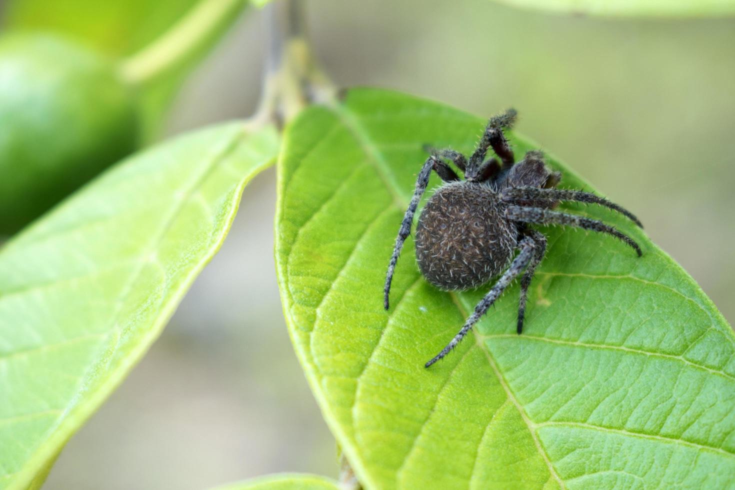 Close-up of spider on leaf photo