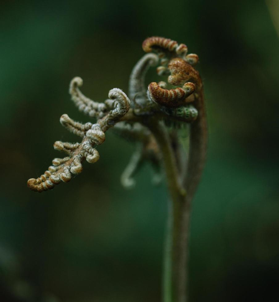 White and brown fern photo