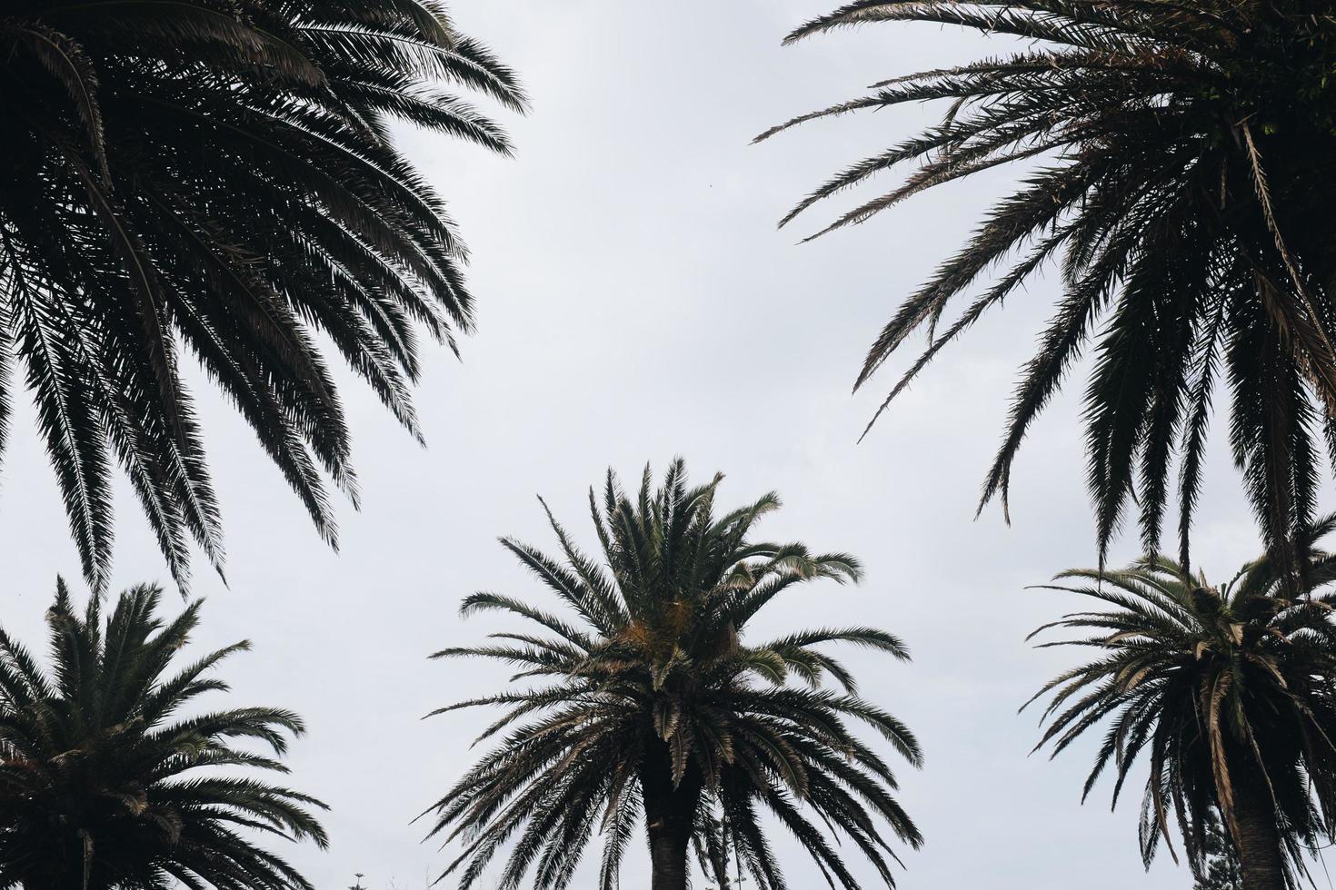 palmeras tropicales foto