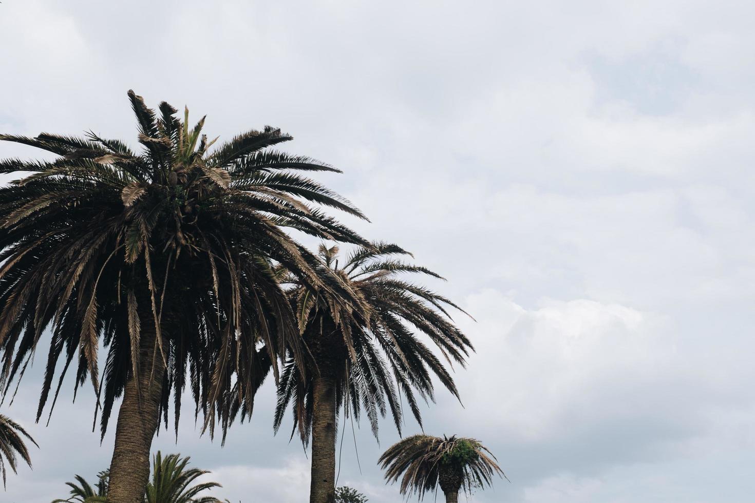 linha de palmeiras foto