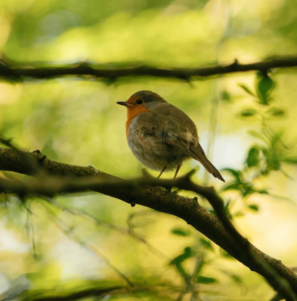 Small bird on tree branch photo