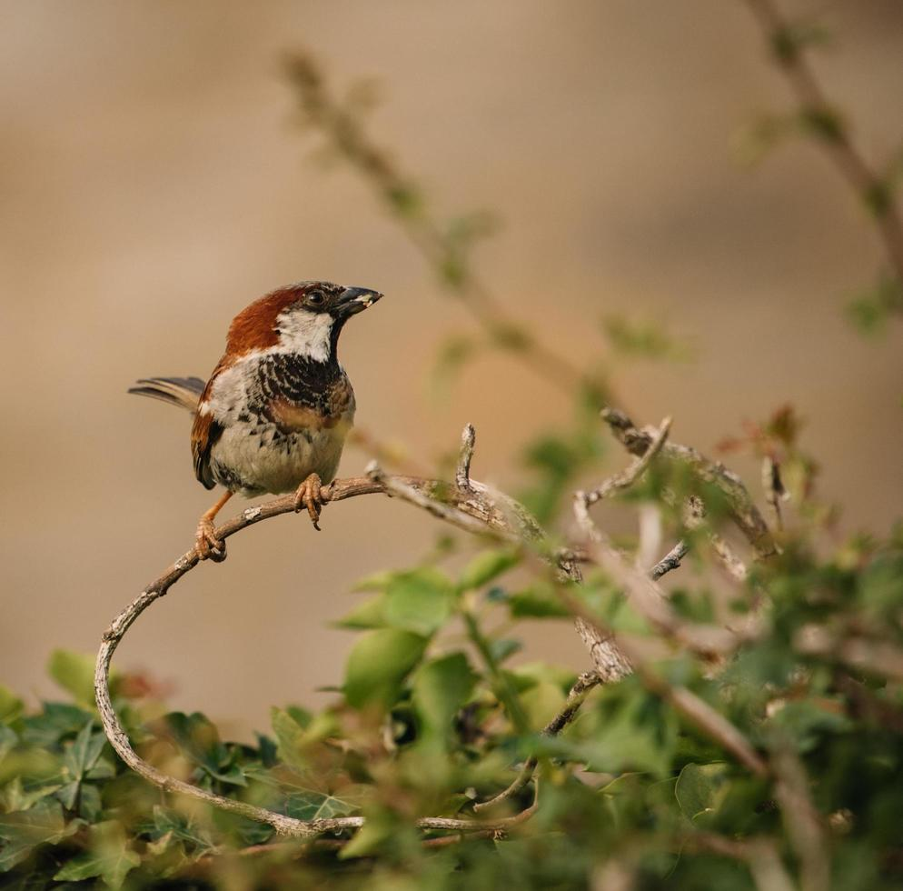 Bird perched on twigs photo