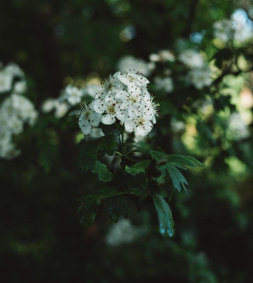 witte bloem in tilt shift lens foto