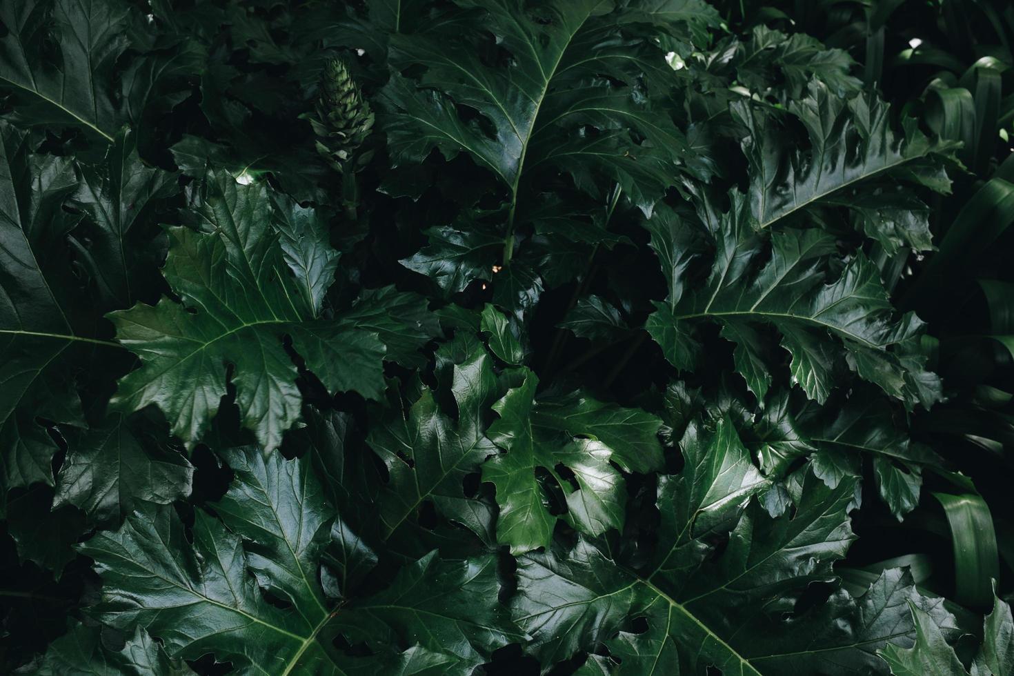 planta de hoja verde foto