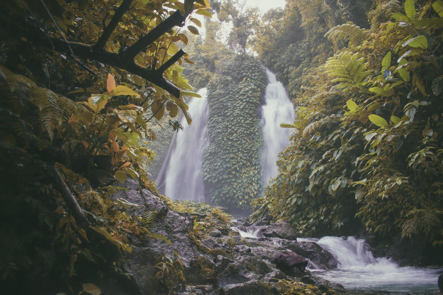 Waterfall surrounded with green trees photo