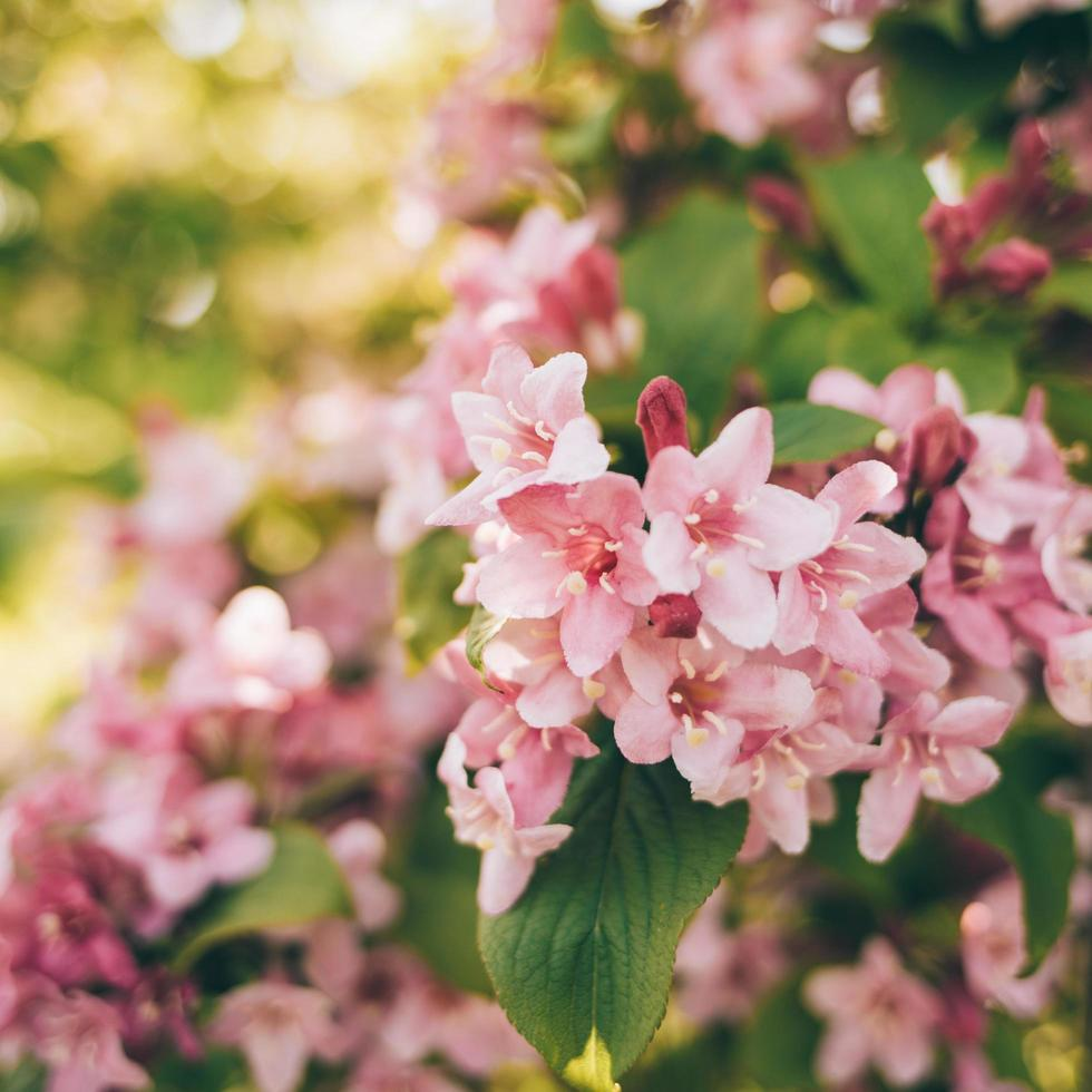 Pink and white flowers photo
