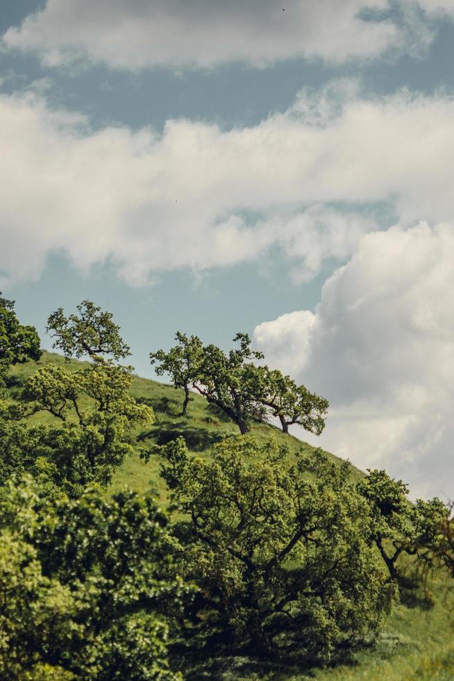 Green trees under blue sky photo