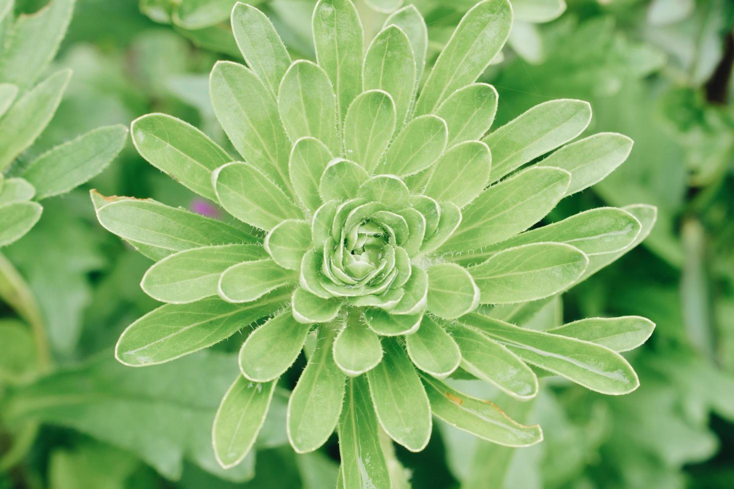 Green plant growing photo