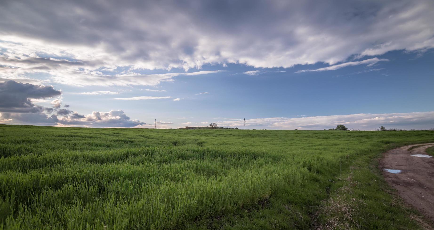 Bright green grass field photo