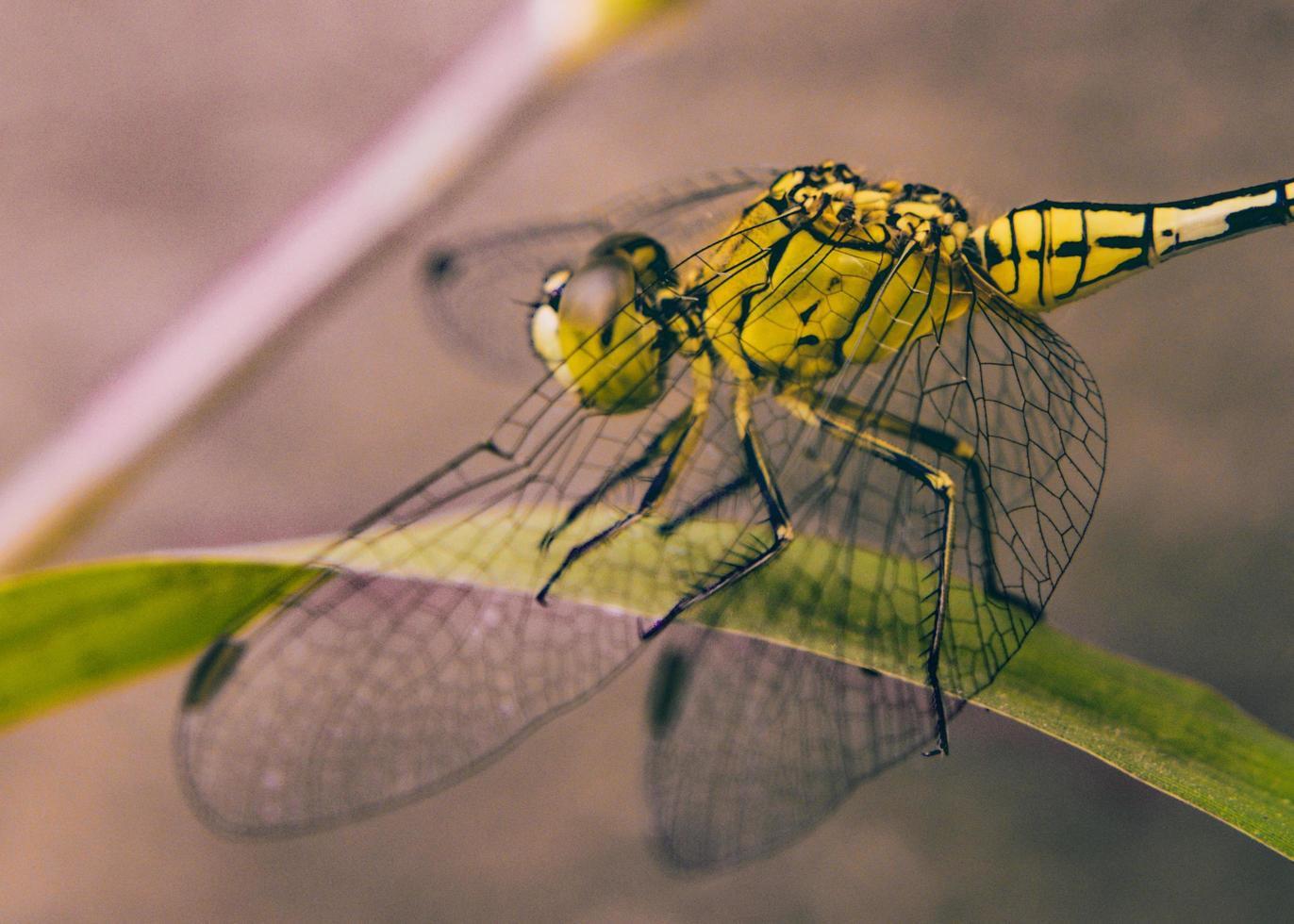 primer plano de libélula foto