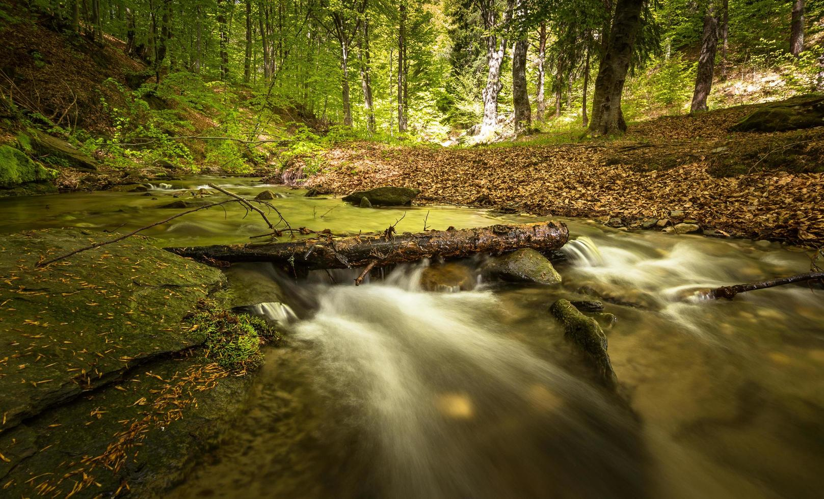Water stream in the forest photo