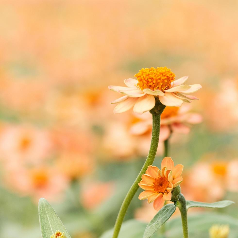 Yellow and orange flowers photo