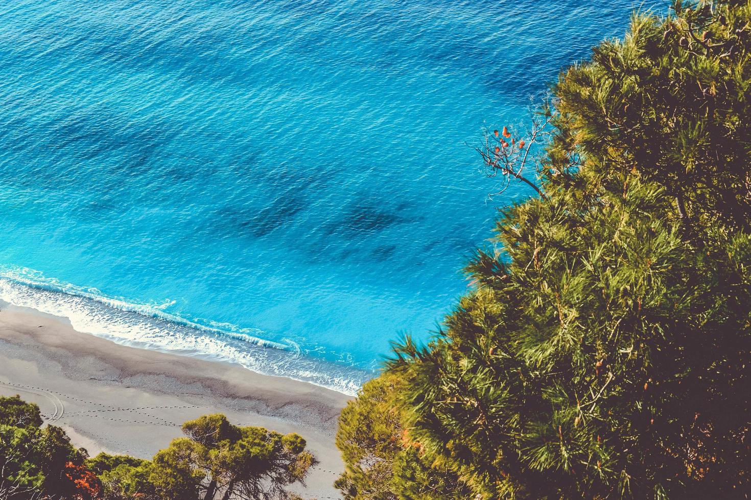 Ocean trees overlooking water photo