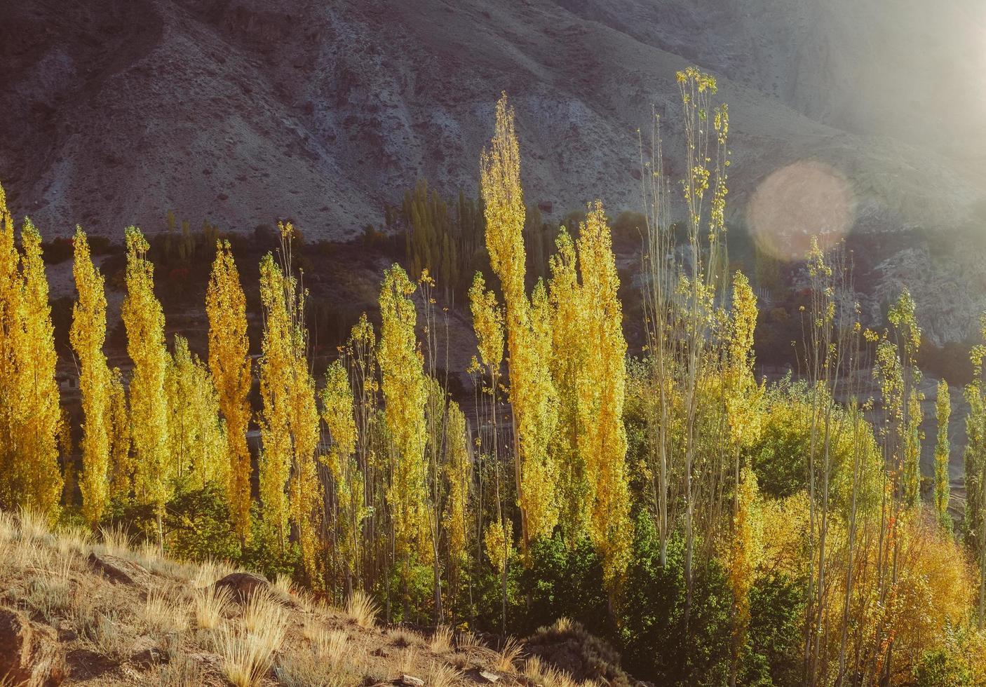 escena de otoño de la luz del sol de la mañana iluminada álamos foto