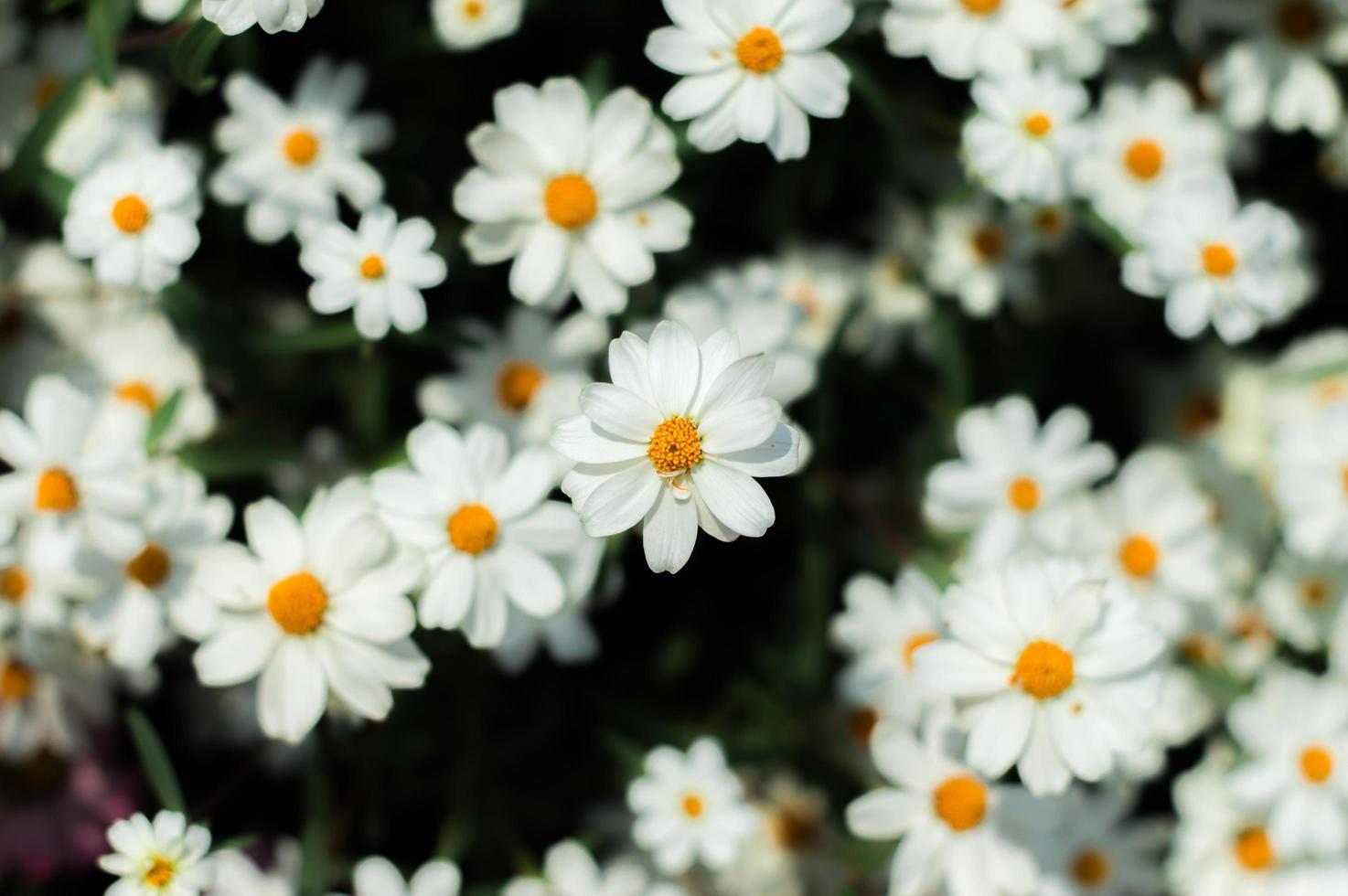 cama de flores blancas foto