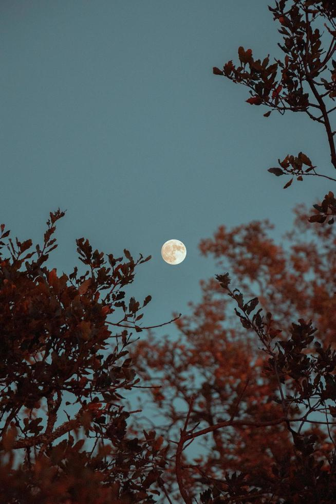 Full moon over the trees photo