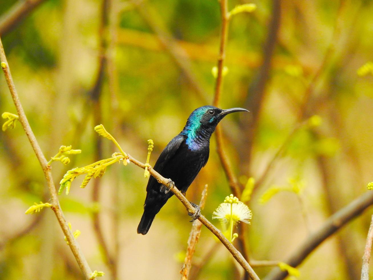 Hummingbird on branch photo