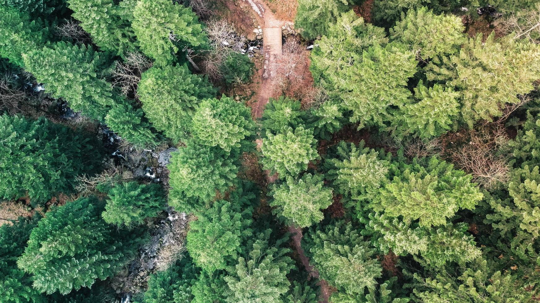 Aerial view of green trees photo