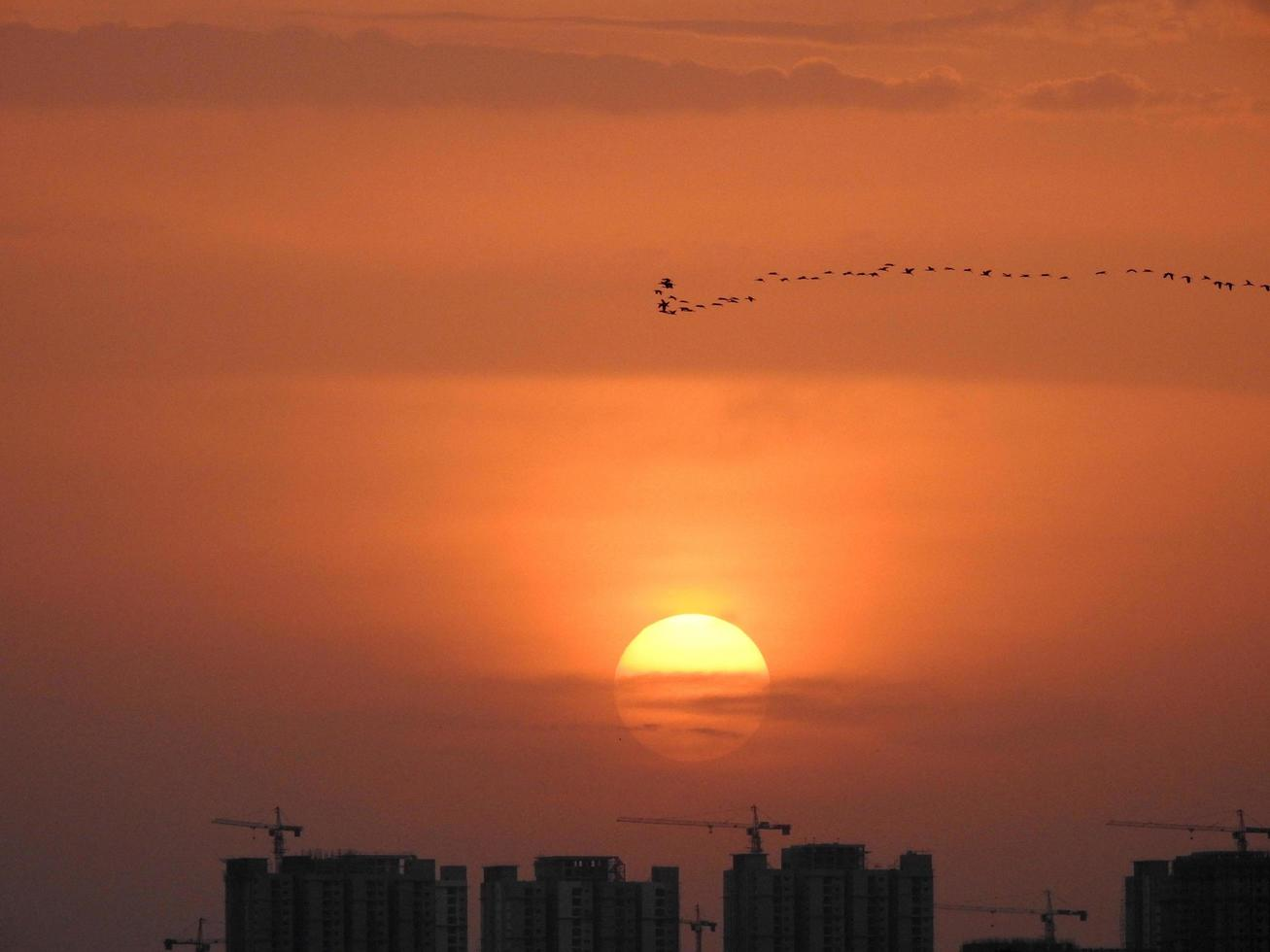 Birds over city at sunset photo