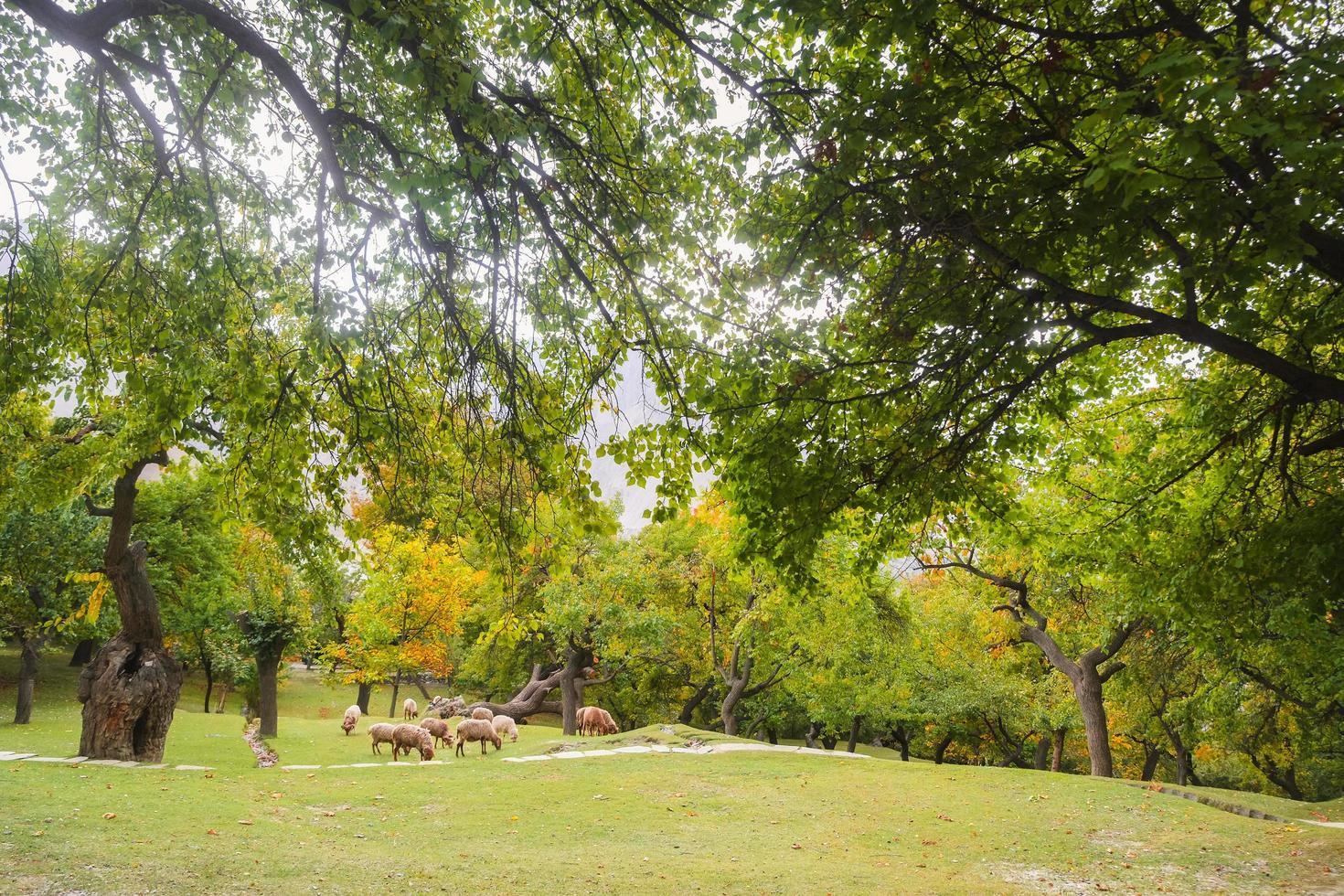 vista del paisaje natural del jardín del parque foto