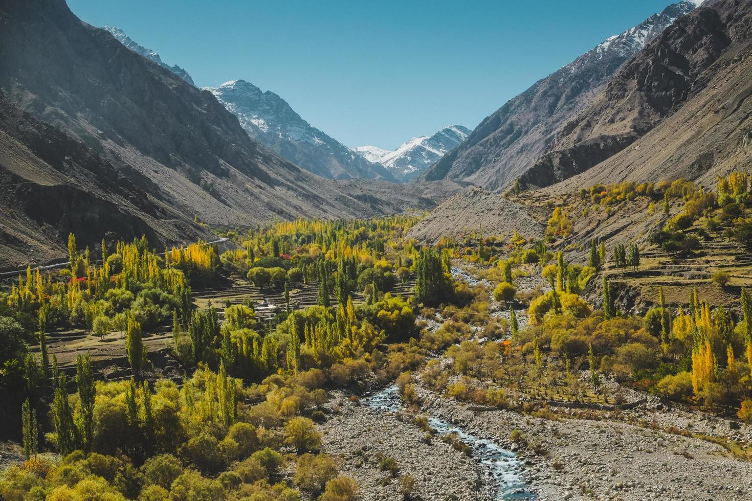 Nature landscape view of yellow and green foliage  photo