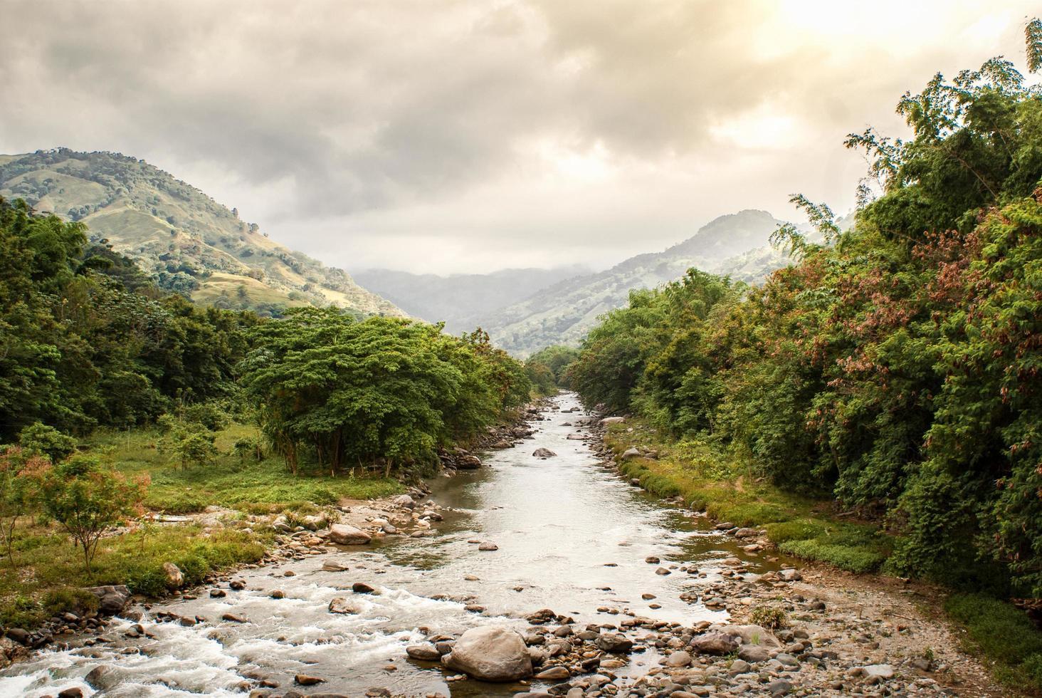 Rocky creek beside trees photo