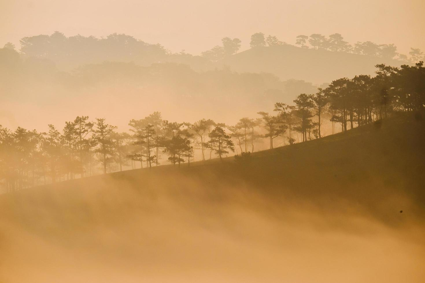 Trees and hills in mist photo