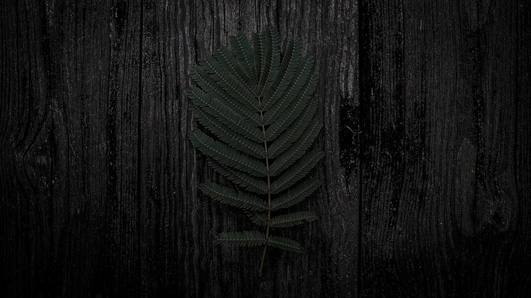 Dark green leaves photo