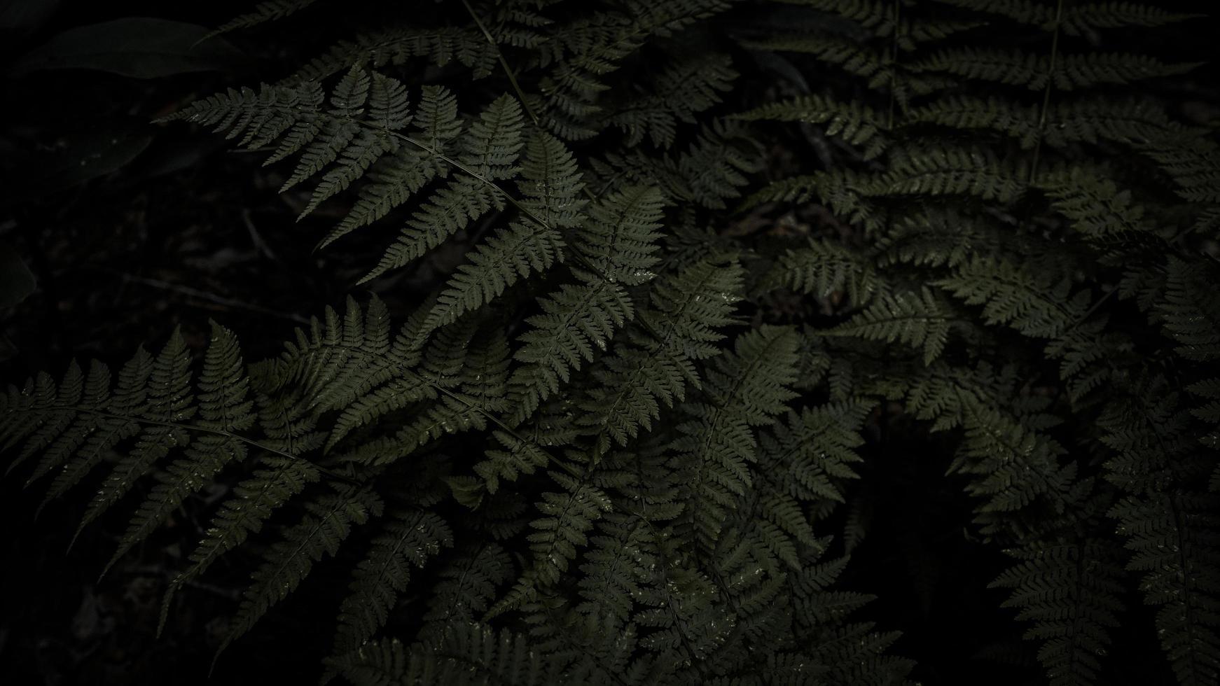 Green fern plant photo
