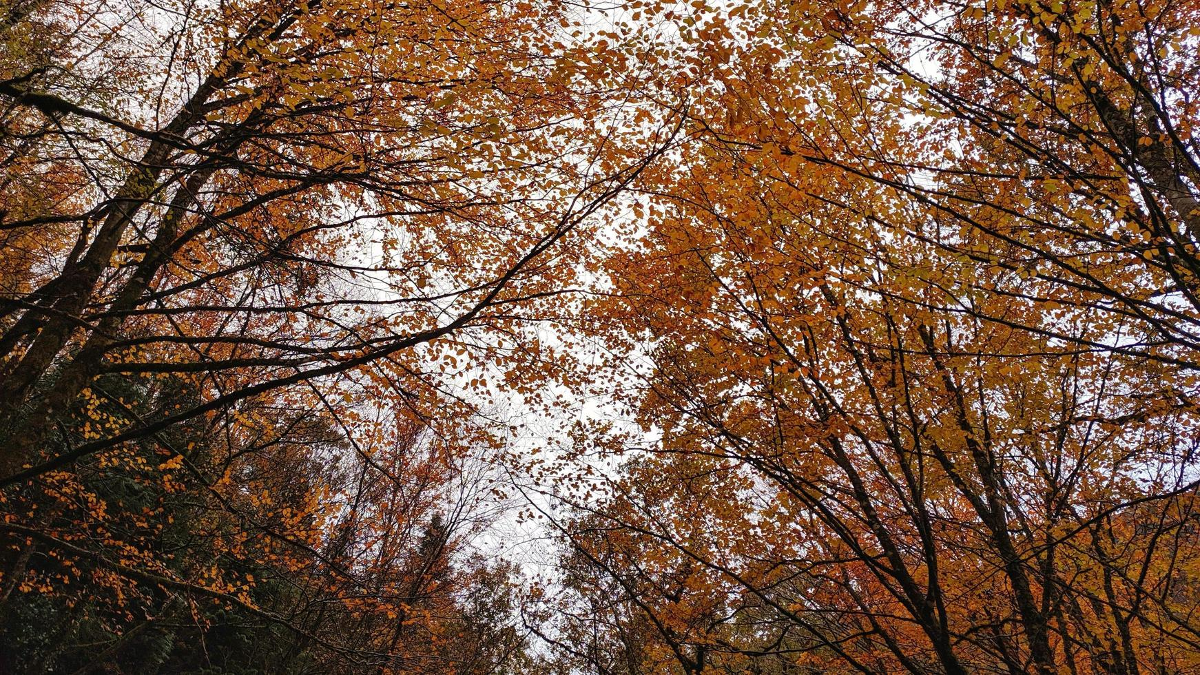 View of autumn leaves photo